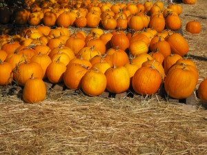 La Familia Pumpkin Patch Day